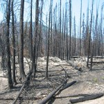 Forest_fire_aftermath_sm