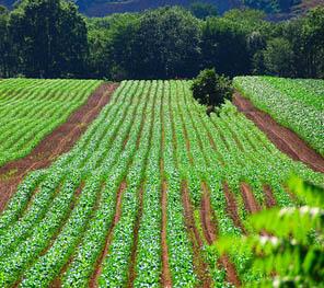 green_farming_ontario